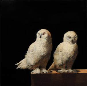 Rescued Snowy Owls